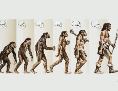 Biologie Quiz 13 | Premium oder Selbstvorbereiter Paket